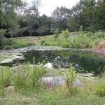 Ecosystem Services and Your Ecosystem Garden: how your property contributes to healthy ecosystems