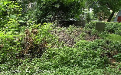 Brush Piles Help Wildlife in Your Ecosystem Garden