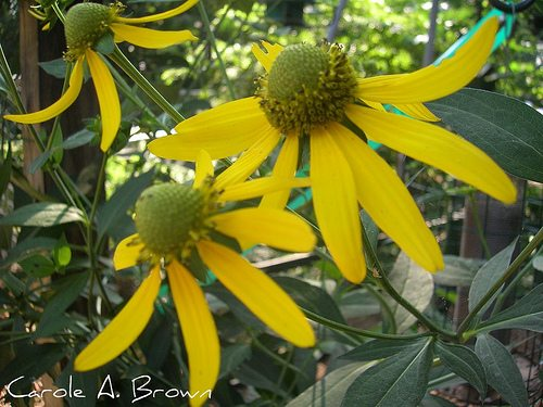 Top 10 Herbaceous Plants to Attract Wildlife to Your Ecosystem Garden