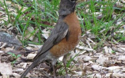 Who's in Your Wildlife Garden? Learning to ID Birds by Song