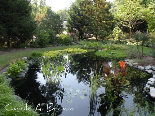 Managing Rainwater in the Ecosystem Garden