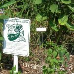 How to Certify your Conservation Garden for Wildlife