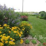 Wildlife Gardens of Cape May, Teresa Knipper