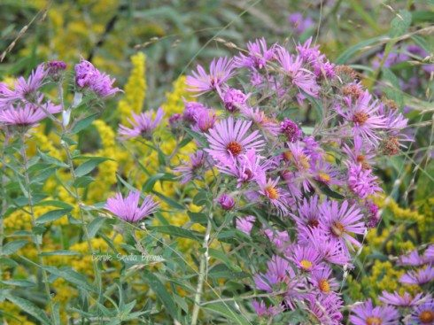 Ultimate Guide to Finding Native Plants
