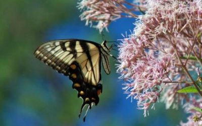 What Plants Attract the Most Wildlife?