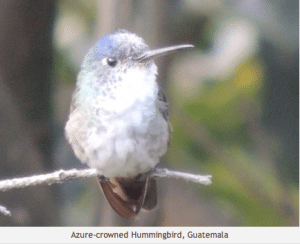 Attracting Birds to Guatemala Farms: A How To