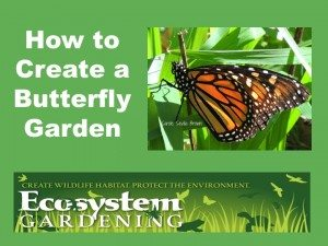 How To Attract More Butterflies To Your Ecosystem Garden