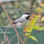 Top Tips to Start a Wildlife Garden Part 2