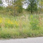 Roadsides for Wildlife