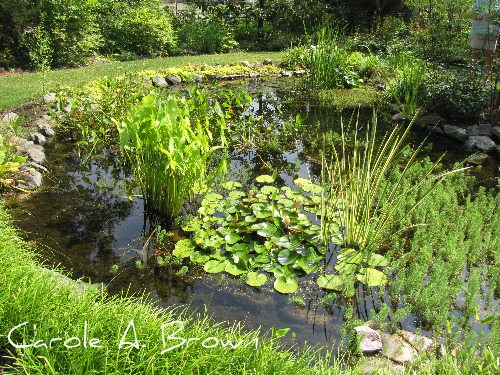 A love letter to wildlife for Garden pond edging