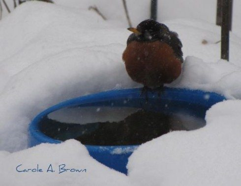 Do Robins Really Return in the Spring