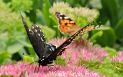 Wildlife Gardeners Spin the Cycle of Life