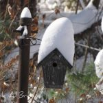 Get your Bird Houses Ready, Spring is Coming