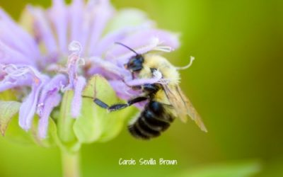 Bees Are Beautiful in the Wildlife Garden