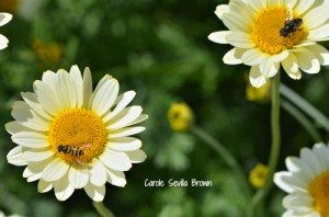 How to Attract More Pollinators