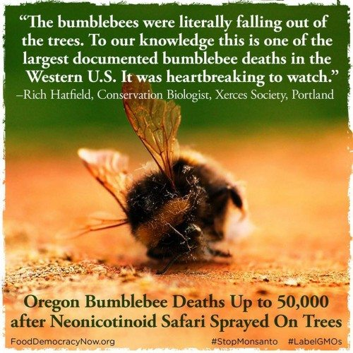Murder of the Bumble Bees