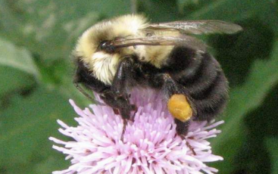 Dave Hunter on Attracting Native Bees